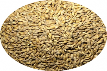 New Country Organics Barley