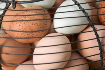 Pullet Eggs - 1 Dozen