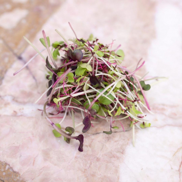 Microgreens, Rainbow Mix