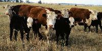Bijou Hills Grass Fed Meat, LLC