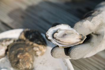 Oysters - Dozen