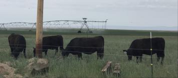 Grass-Fed Beef-deposit (half)