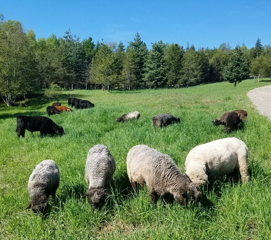 The pasture is better when we graze together