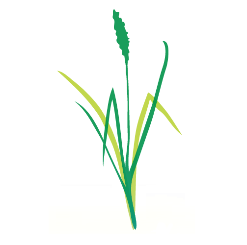 Ramstead-Grass.png