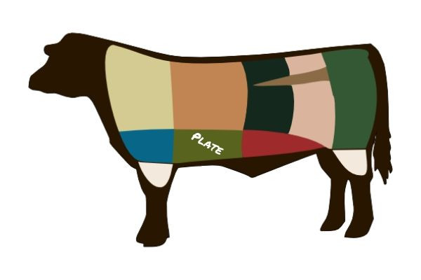 An illustration highlighting the plate primal region of the beef cow.