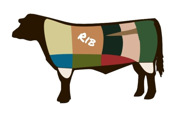 An illustration highlighting the rib primal region of the beef cow.