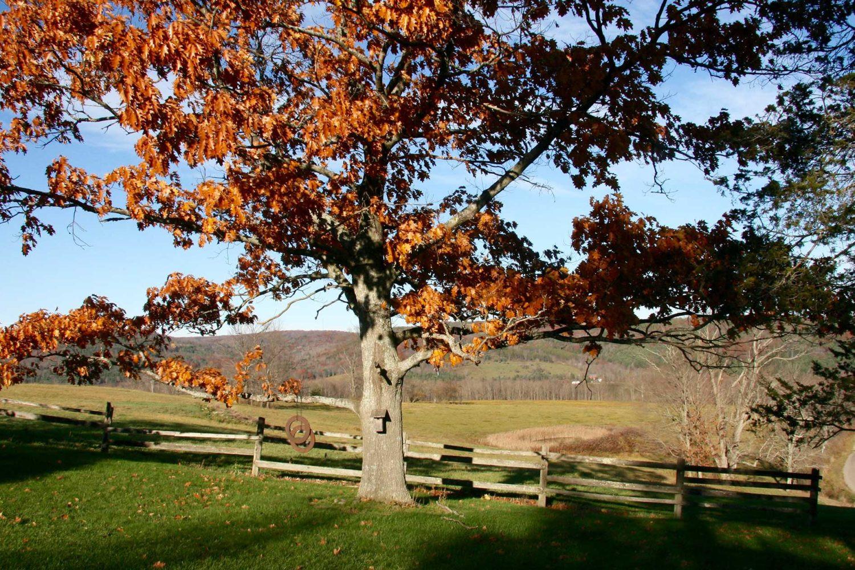 November Farm News: Pasture-Raised Turkeys and Local Maple Syrup!