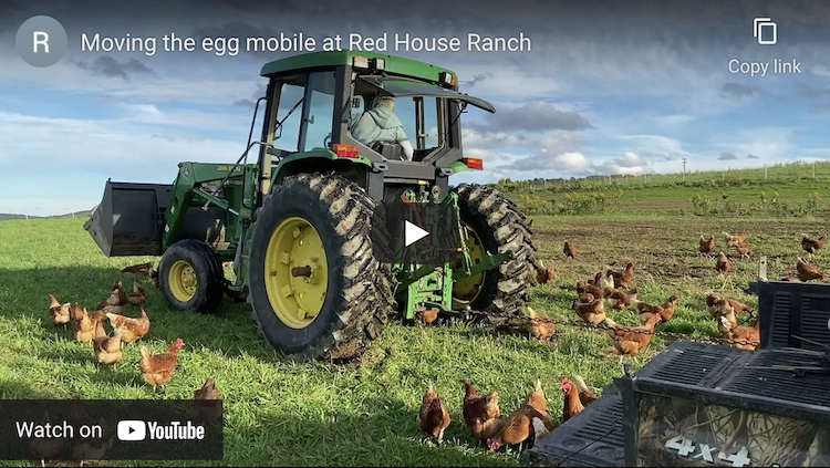 Moving the chicken egg mobile at Red House Ranch