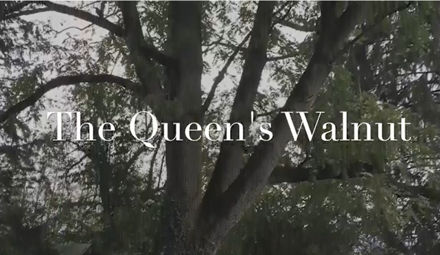 Queen's Walnut
