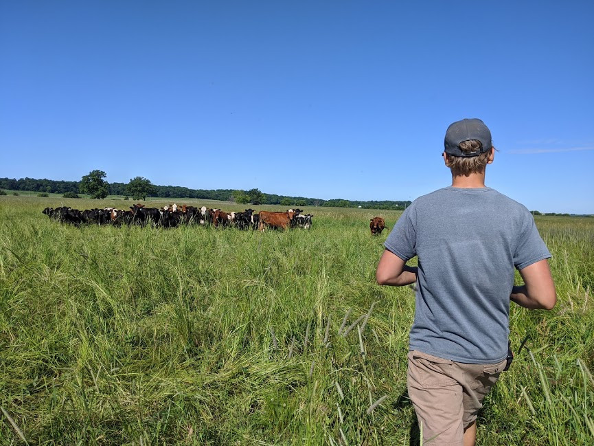 What makes grass-fed beef better?