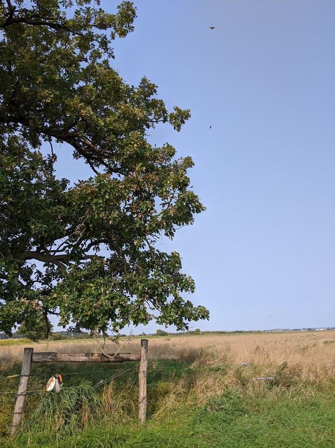 butterflies-oak-tree.jpg