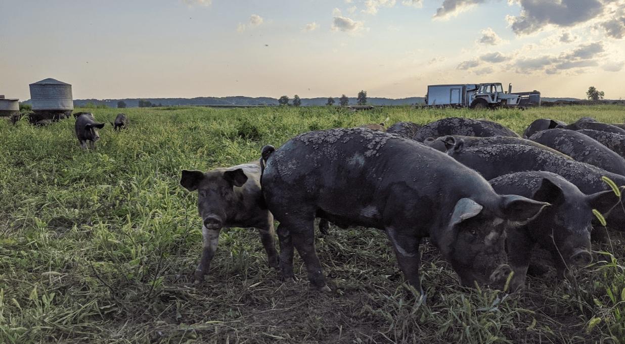Seasonally Pasture Raised Pork