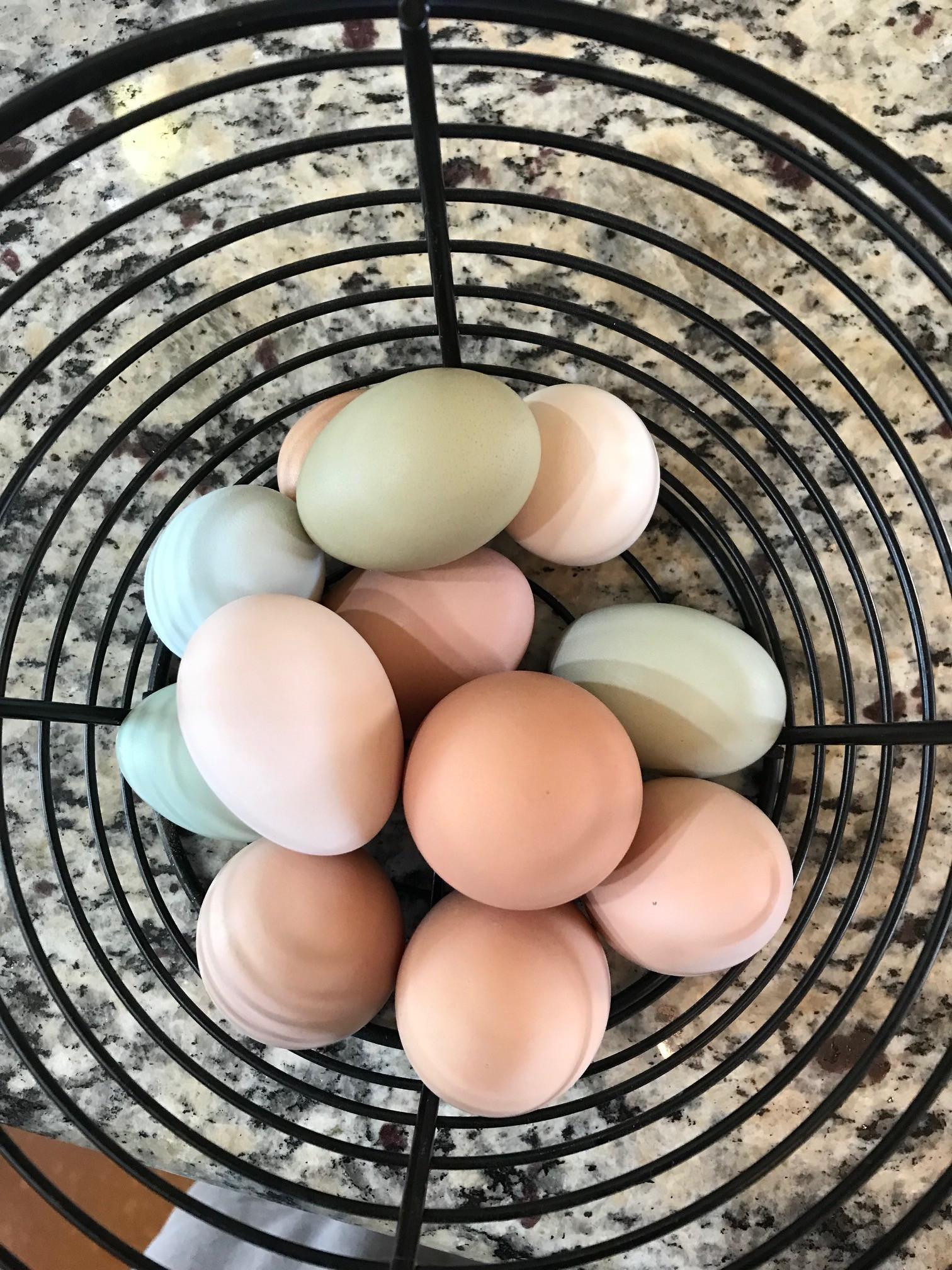 One Dozen Free Range Eggs
