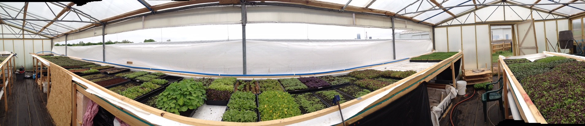 Greenhouse-pano.JPG
