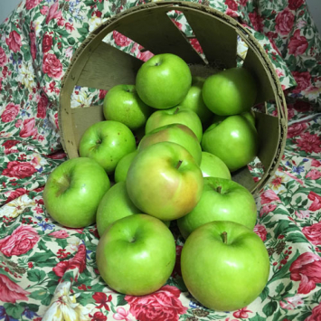 Apples - Granny Smith