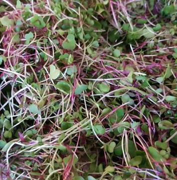 Microgreens (organic)