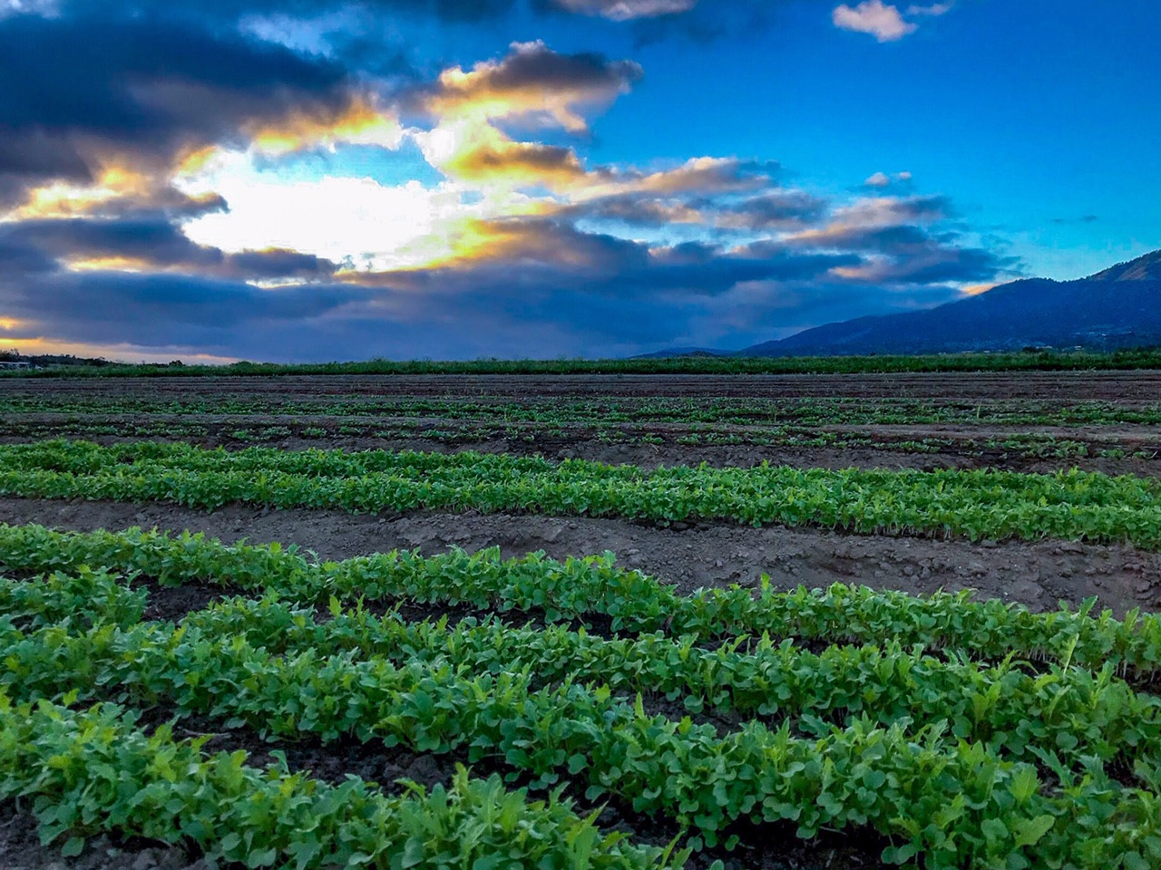 Certified Organic Farm
