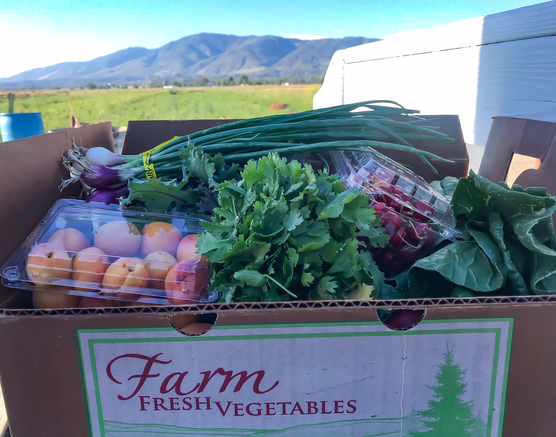 Freshly harvested veggies and fruits in our Organic Produce C.S.A. grown right here on our sustainable farm!