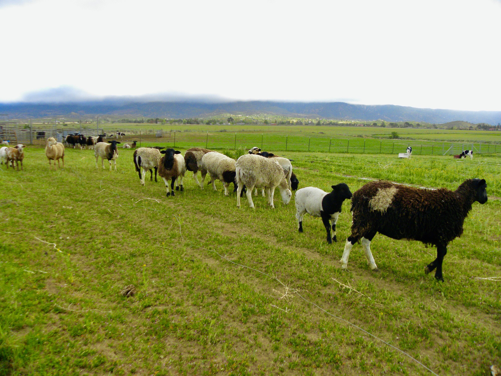Sage Mountain Beef provides an excellent source of protein, vitamin B12, selenium, zinc, iron, phosphorus and other B vitamins without the concern for pesticide, hormone and antibiotic residues that may be found in other meats.