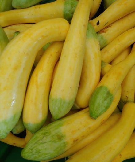 Summer Squash & Zucchini, BULK, 1/2 bushel