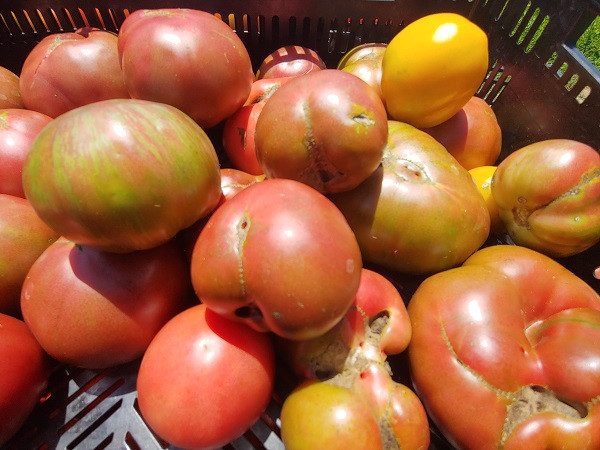 Tomatoes, Heirloom