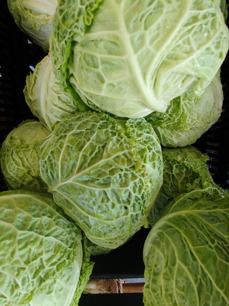 Savoy Cabbage - by the lb
