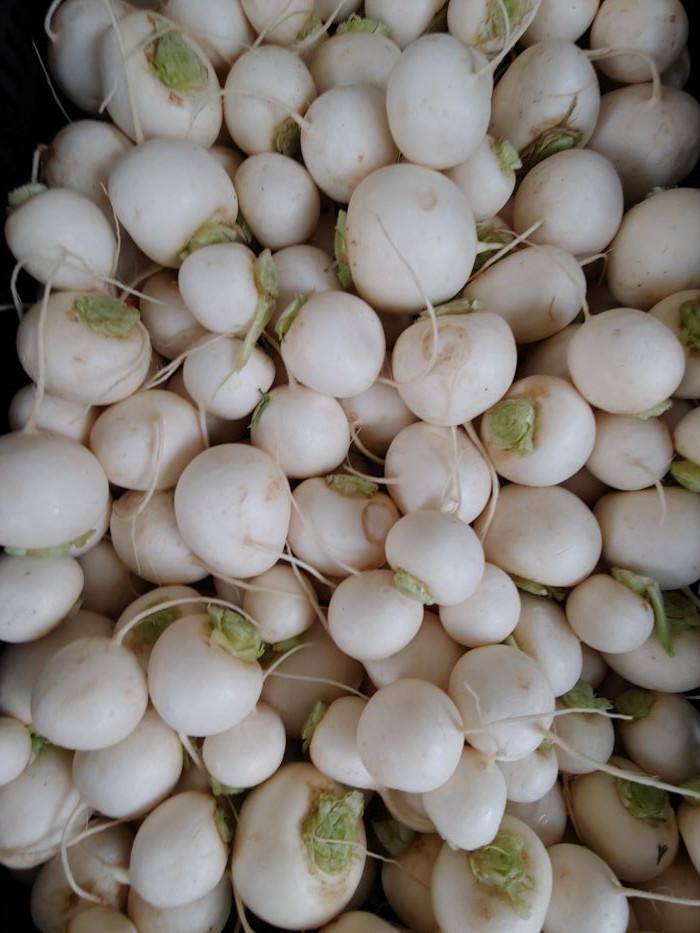 Turnips, Hakurei, BULK