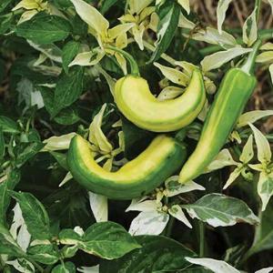 Plants, Veggies, Hot Pepper, Fish