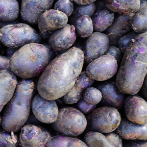 "Potatoes, ""All Blue"""