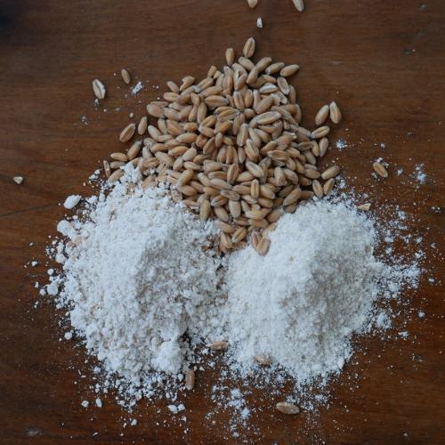 Grains, Flours, & Pasta