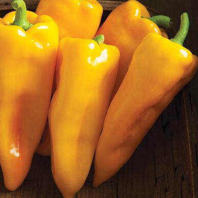 Plants, Veggies, Sweet Pepper, 'Escamillo'