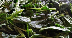 Spinach - Mid-Size