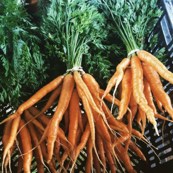 Carrots by the Bunch