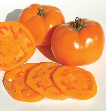 Plants, Veggies, Tomato, 'Valencia'