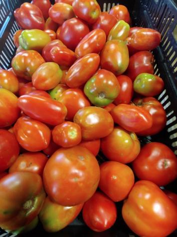 Tomatoes, Paste, BULK, 20 lb box
