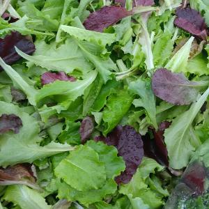 Plants, Veggies, Lettuce Mix, 4-pack