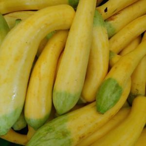 Summer Squash - mix of zephyr and patty pan