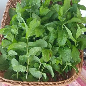 Mint, Peppermint