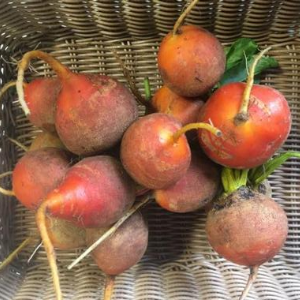 Beets, Golden, By the Bunch