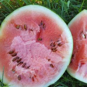 Watermelon, Wholesale