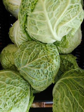 Cabbage, Savoy, Wholesale