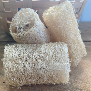 Luffa (locally grown!)