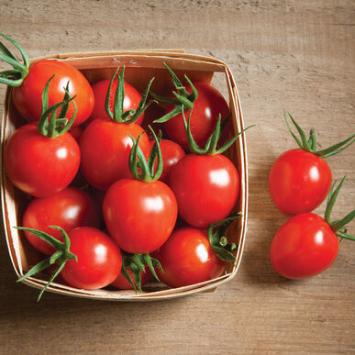 Plants, Veggies, Tomato,  'Sweet 100'