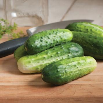 Plants, Veggies, Pickling Cucumber, 4-pack