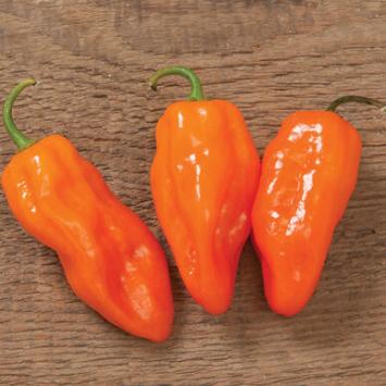 Plants, Veggies, Hot Pepper, Habanero