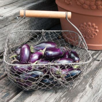 Plants, Veggies, 'Patio Baby' Eggplant