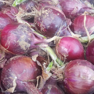 Onions, Red, Wholesale