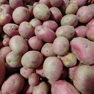 Potatoes, Red, Wholesale