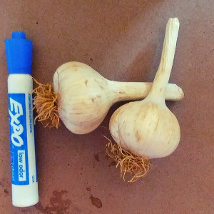 Garlic, Wholesale