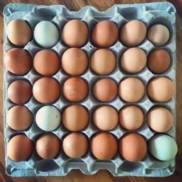Flat of Eggs